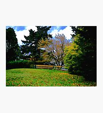 Park Fence and Trees Photographic Print