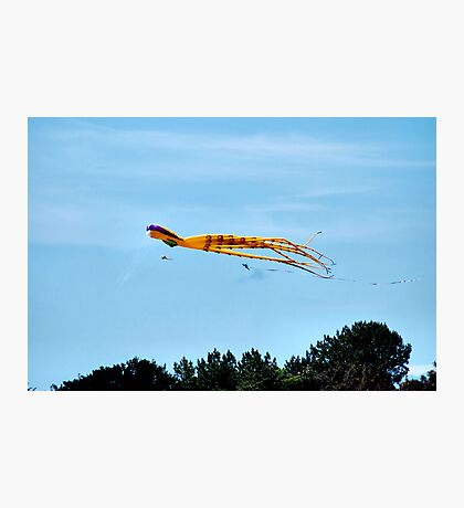 When Octopi Fly Photographic Print