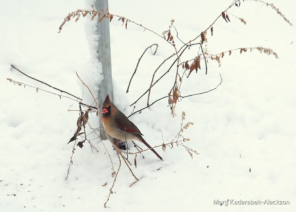 Winter Cardinal by Mary Kaderabek-Aleckson