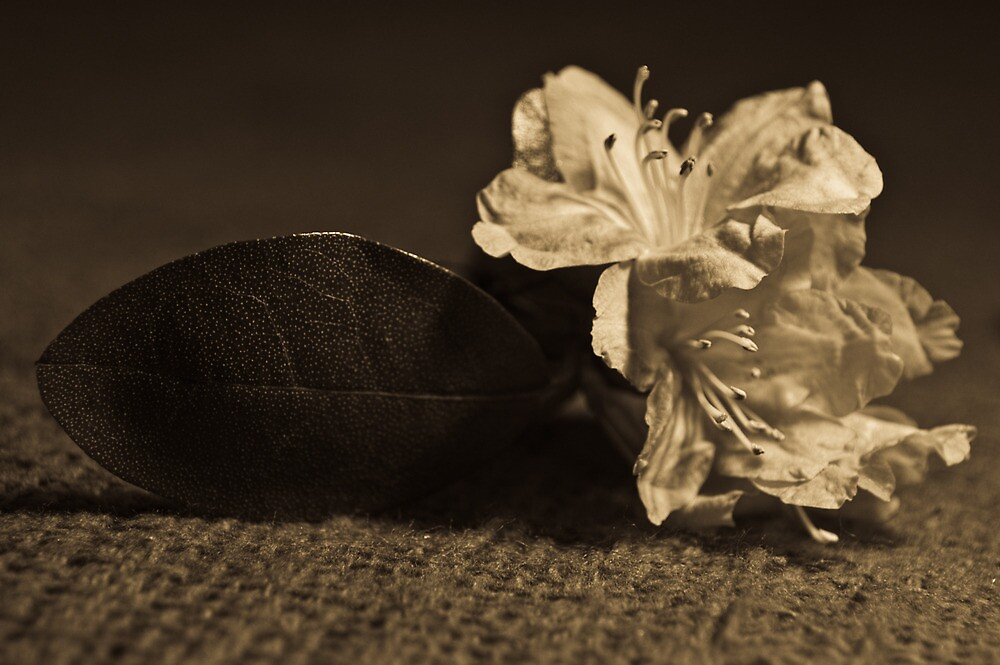 Azalea Still Life by Shawn Huber