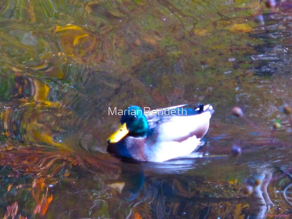 Glazed duck by MarianBendeth