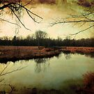 Wetland by jrier
