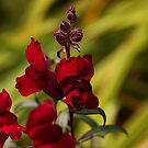 Red Beauty by Bill D. Bell
