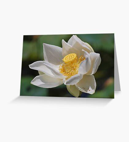 Opened Lotus Greeting Card