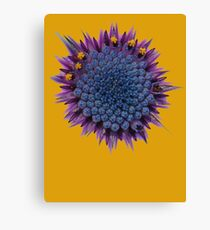 Abstract African Daisy Canvas Print