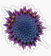 Abstract African Daisy Sticker