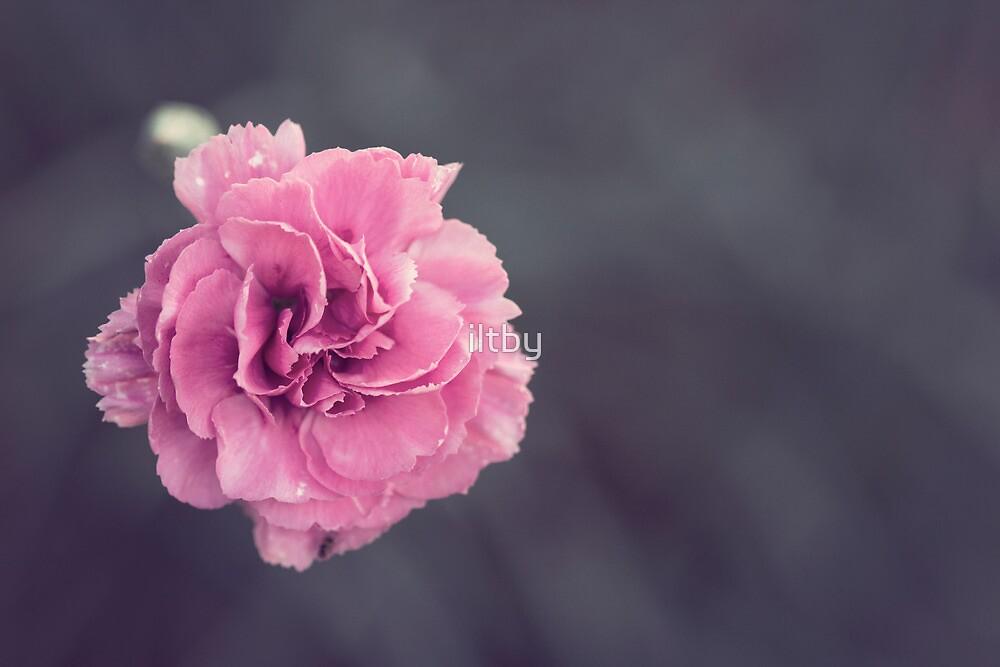 Vintage Bloom by Josie Eldred