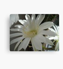 Kaktus Flowers. Canvas Print