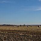 Straw Fields and Prairies by Scott Hendricks