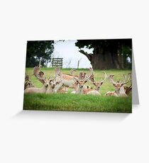 deer of Woburn abbey  Greeting Card