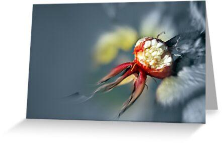 lifepod by NordicBlackbird