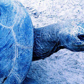 Tortoise by schizomania