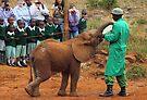 Baby Elephant Feeding by Carole-Anne