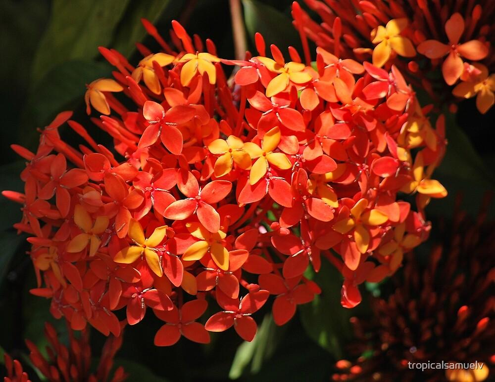 Orange Beauty by tropicalsamuelv