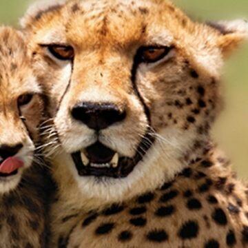 Cheetah & Cub  by Dozi