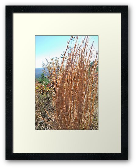 pretty weeds by Tracey Hampton