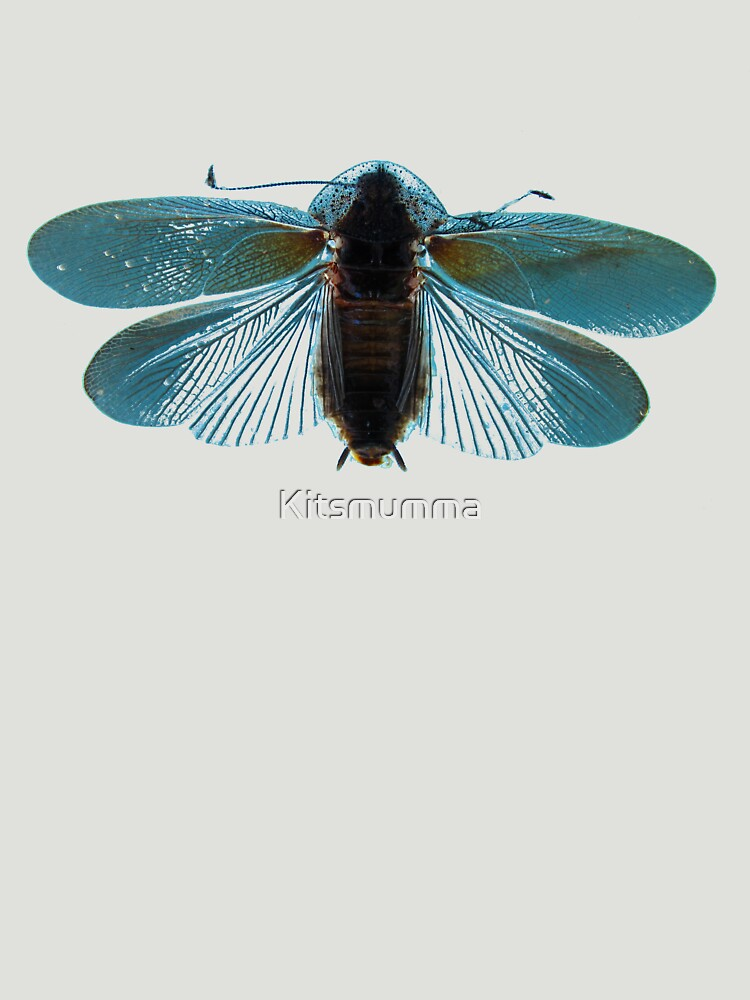 Blue Moth by Kitsmumma