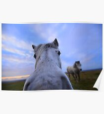 Dartmoor: 'Extreme Close Up' Poster