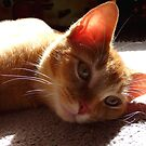 Chilling in the sun by Amy Herrfurth