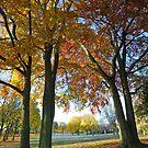 Autumn Parkland by StephenRB