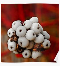 White Berry Poster