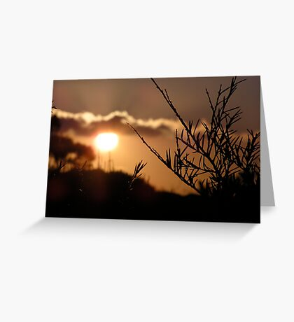 Sunset Branches Greeting Card