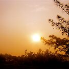 Sunset Silouhettes by Michelle Ricketts