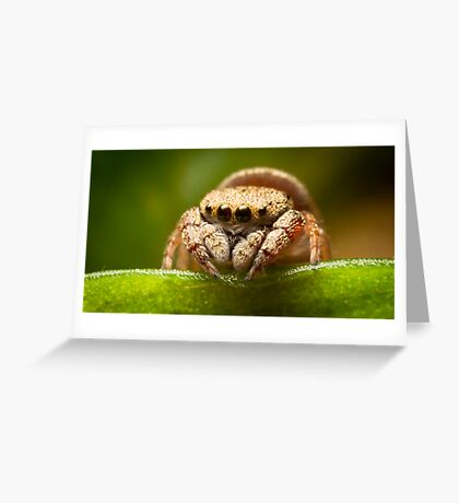 (Simaethula ZZ483) Jumping Spider #2 Greeting Card