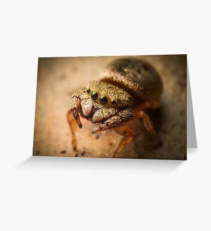 (Simaethula ZZ483) Jumping Spider #4 Greeting Card
