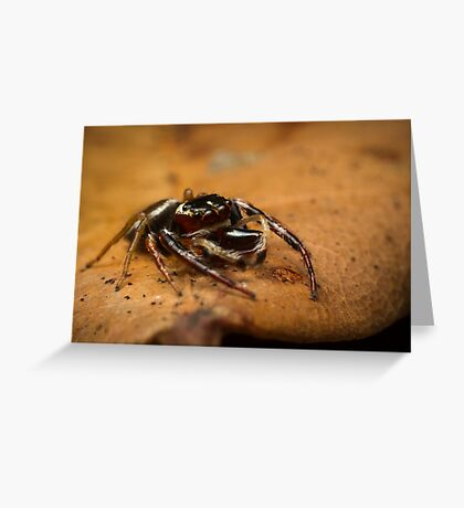 (Opisthoncus polyphemus) Male Jumping Spider #2 Greeting Card