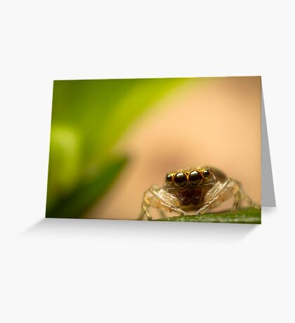(Astia nodosa?) Jumping Spider Greeting Card