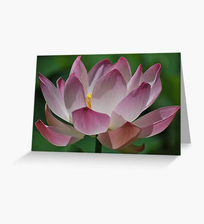 Opening Beauty  Greeting Card