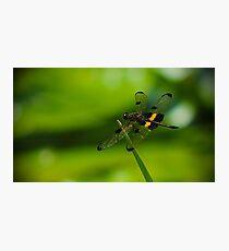 Dragonfly Macro Photographic Print