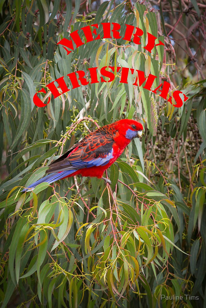 Merry Christmas Rosella by Pauline Tims