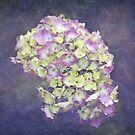 Hydrangea Bouquet by Astrid Ewing Photography