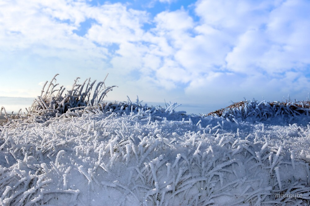 frosty snow covered grass ditch by morrbyte