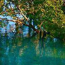 Mangroves at Cygnet Bay by Extraordinary Light