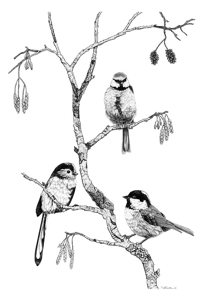 Small Garden Birds by Paul Stratton