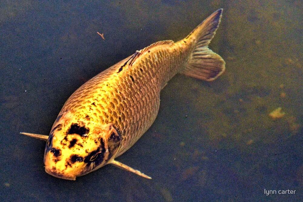 Golden Fish by lynn carter
