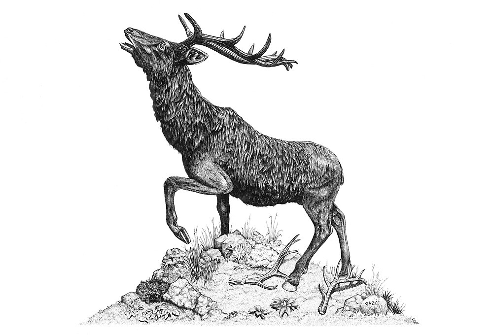 Stag by Paul Stratton