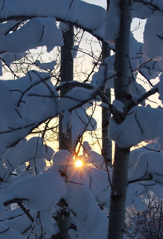 sunrise through new-fallen snow by Marilylle  Soveran