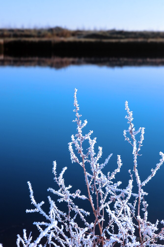icy twigs in snow against cold blue sky and river by morrbyte