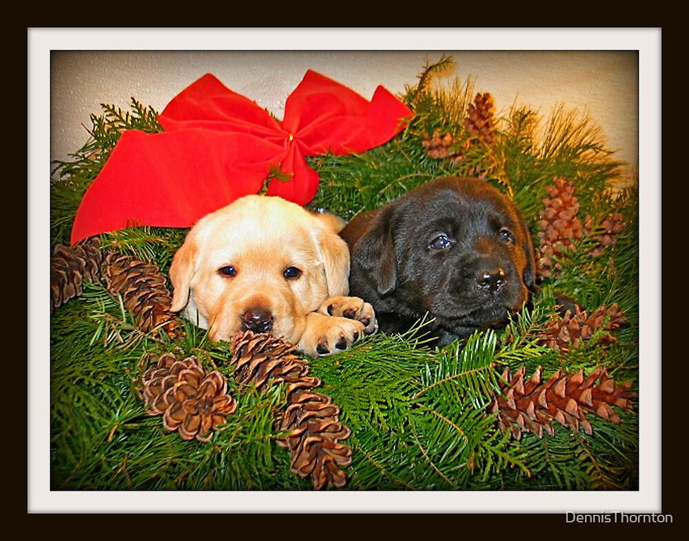 Christmas Wreath by DennisThornton