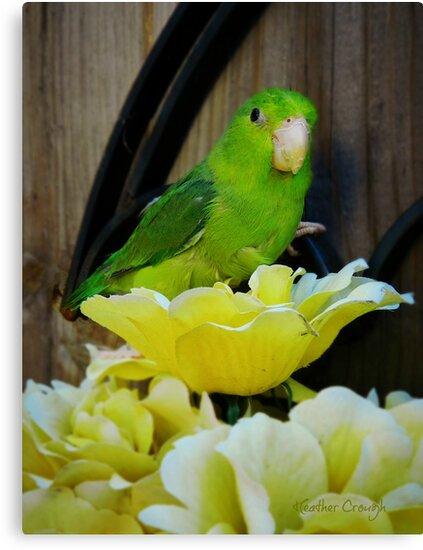 As pretty as a flower by Heather Crough