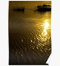 rippled calm water surface with rushes at sunset Poster