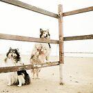 cowgirls! by BellatrixBlack