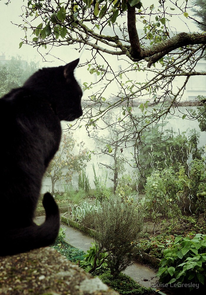 Cat and garden... by Louise LeGresley