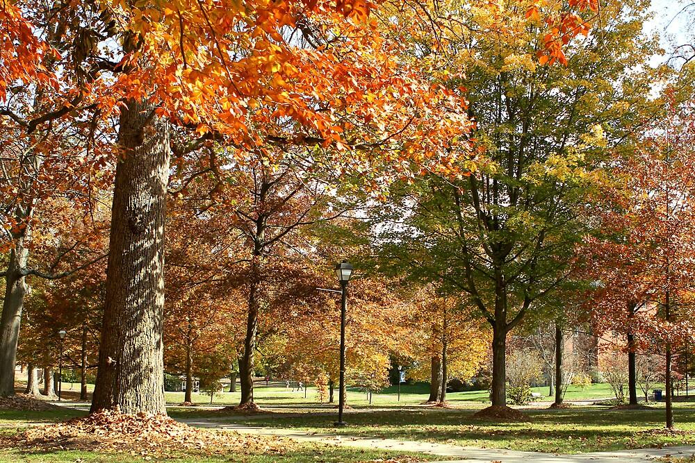 Autumn Splendor by Salina Gibson