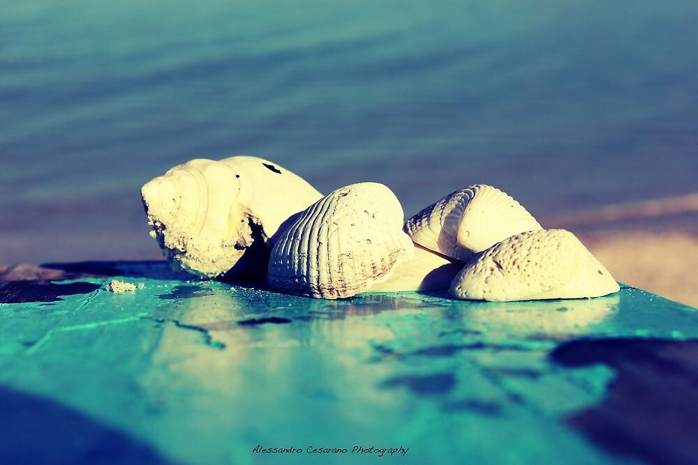 Shells by Alessandro Cesarano