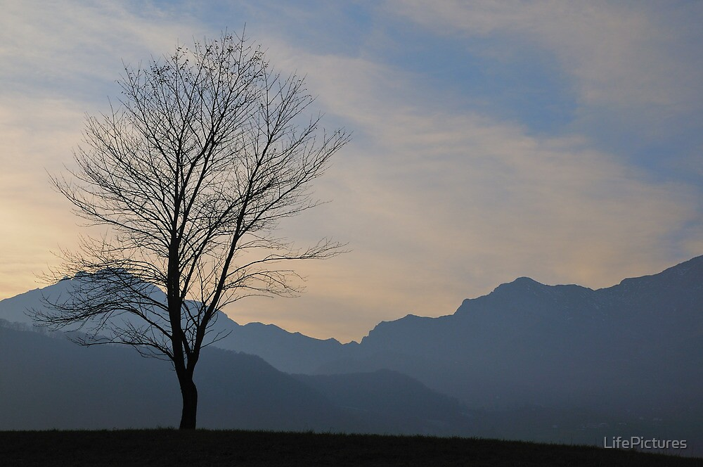 Lonely tree by LifePictures